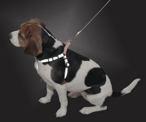 LaZer Brite Reflective Dog Harness